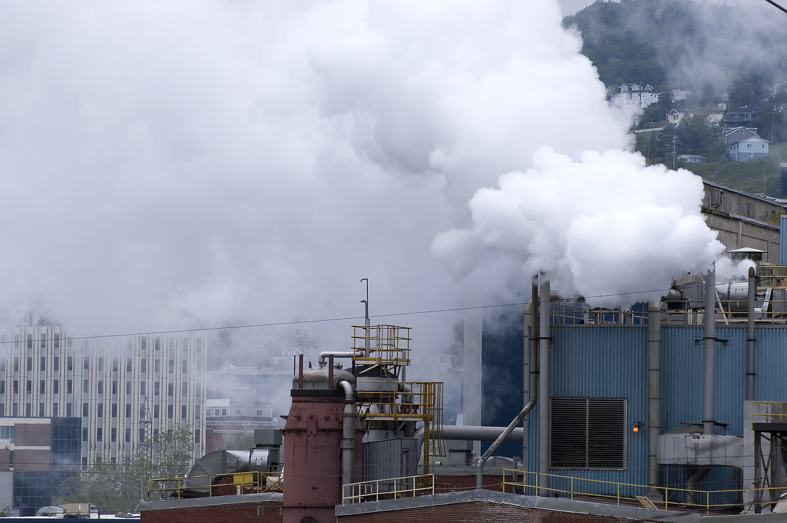 Pollution and Your Immune System