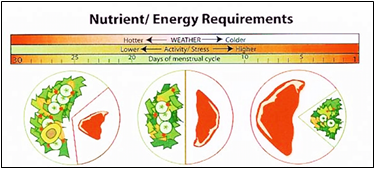 Macronutrient Ratios, Micronutrients and Your Immune System
